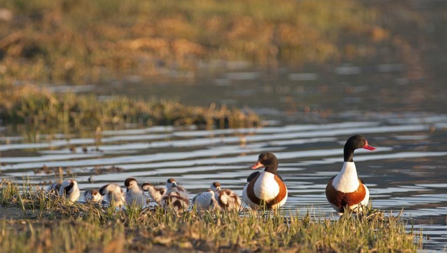 Ta vare på Norges viktigste fugleområder!